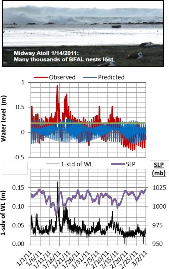 Figure 3-14 Photo (top panel) shows the impact of waves on the Midway Islands during a winter storm. Multiple extreme sea levels exceeded the level of Mean High High Water (MHHW, green line) by about 0.75 m in January 2011 and 0.3 m in February (red). Some storms overlapped with high spring tides (blue). As the storms passed overhead, sea-level pressure (SLP, purple) dropped and wave activity increased (black, 1-stdev of hourly WL as a proxy) causing a significant wave setup in water levels (red). BFAL = Black Footed Albatross. 1 m = 0.33 ft. (Courtesy of US Fish and Wildlife Service. Data from NOAA Tide Station at Midway Island.)